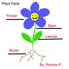... things on Pinterest | Plant Life Cycles, Parts Of A Plant and Plants