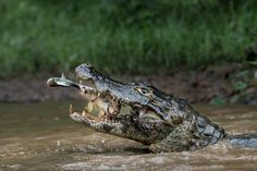 Picture of Brazilian Pantanal
