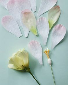 "88 Likes, 5 Comments - Lynn Dolan (@a.casual.florilegium) on Instagram: ""LISIANTHUS PETAL ASSEMBLY. Take a strip of pale florist crepe and make the base of the flower…"""