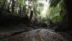 Aussie Environmentalists Are Really Angry Right Now - The Abbott government is applying to have 74,000 hectares of Tasmanian forest removed from World Heritage listing.