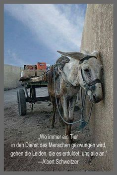 So very tired of all th pain/ abuse/ neglect inflicted on animals! AND o/t denial from people who care fr animals (but keep on eating & wearing them) Vida Animal, Mundo Animal, Planeta Animal, Albert Schweitzer, Suffering In Silence, Stop Animal Cruelty, Tier Fotos, Fauna, Animal Welfare