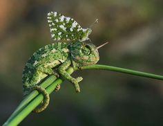 Фото животных с бабочками