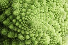 Close up of the vegetable Romanesco Broccoli: photographer Alistair Knock (greens and pattern)