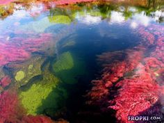 "Amazing photos of the ""liquid rainbow"" river in colombia. you've got to see these! - There is a river in colombia, located in the serrania de la macarena province of meta, known to locals as ""the river of five colors"" or ""the liquid rainbow"". Rainbow River, Oh The Places You'll Go, Places To Visit, Beautiful World, Beautiful Places, Amazing Places, Liquid Rainbow, World Of Wanderlust, Crystal River"