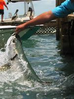 Robbie's of Islamorada Tarpon Feeding-This is a must if you visit the Keys! Cheap fun with an adrenaline rush to boot! Florida Vacation, Florida Travel, Florida Keys, Vacation Destinations, Vacation Spots, Key Largo Florida, Giant Fish, The Fam, Sunshine State