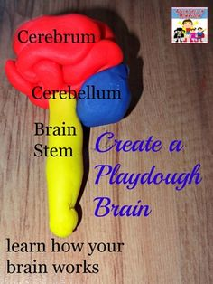 How to make a playdough brain model - Adventures in Mommydom