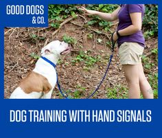 An Kety Pet Care. Get Your Dog Trained Today With These Simple Tips. Training your dog is important for an obedient relationship between you and your canine friend. During the training process, you and your dog will experien Dog Commands Training, Dog Training Books, Puppy Training Tips, Training Your Dog, Agility Training, Training Schedule, Deaf Dog, Dog Care, Puppy Care