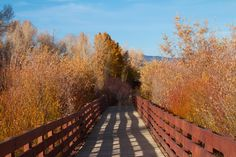 Rustic wooden foot bridge walking trail surrounded by bright yellow and orange trees.  To purchase visit: www.cookiecardsonline.com