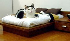 Bedroom Set for Cats