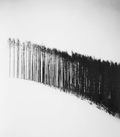Beautifully graphic image of trees against a landscape of snow. Abstract Photography, Nature Photography, Minimalist Photography, Belle Photo, Black And White Photography, Monochrome, Illustration Art, Artwork, Painting