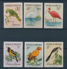 VENEZUELA - BIRDS