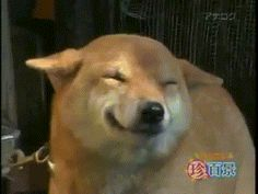 When I'm showing someone something I thought was funny and waiting for their reaction