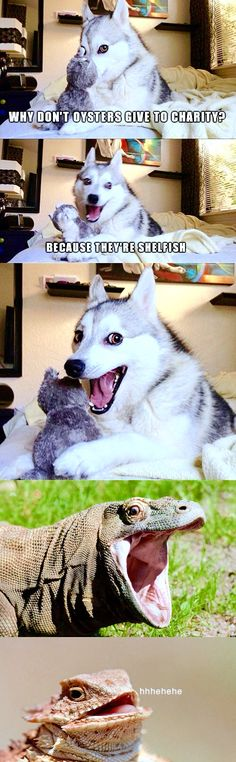 One of Moon Moon's hilarious jokes! At least Moon Moon thinks that they are - Funny Dog Quotes - One of Moon Moon's hilarious jokes! At least Moon Moon thinks that they are hilarious! The post One of Moon Moon's hilarious jokes! At least Moon Moon th Husky Jokes, Funny Dog Jokes, Dog Quotes Funny, Crazy Funny Memes, Really Funny Memes, Funny Relatable Memes, Funny Shit, Funny Husky, Mom Funny