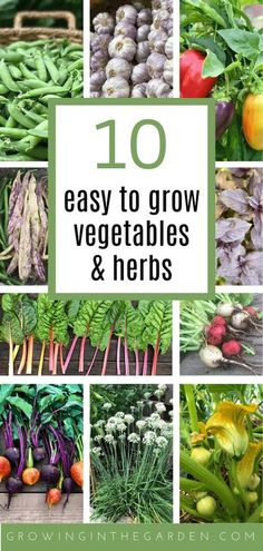 Gardening for Beginners: 10 Easy to Grow Vegetables and Herbs | Growing In The Garden