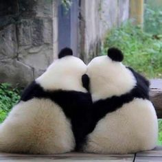 139 thousand likes 412 feedback Panda Vibes pandavibes on Instagr Baby Animals Super Cute, Cute Little Animals, Cute Funny Animals, Cute Dogs, Cute Babies, Panda Mignon, Panda Lindo, Baby Panda Bears, Baby Pandas