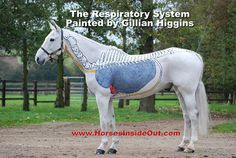 Horse Inside Out - Respiratory Sysrem