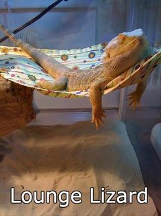 I have always wanted a bearded dragon! I have always wanted a bearded dragon! I have always wanted a bearded dragon! Les Reptiles, Cute Reptiles, Amphibians, Animals And Pets, Baby Animals, Funny Animals, Cute Animals, Funny Pets, Animal Memes
