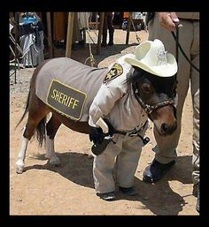 horse dressed up like sheriff