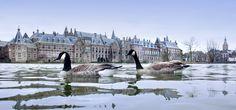 Den Haag - Parlament