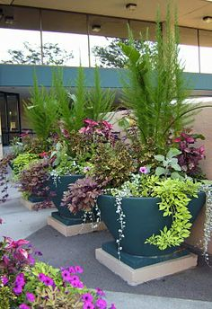 Large pots filled with flowing annuals make quite a dramatic statement.