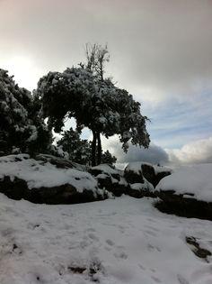 La sierra de #Cazorla  cubierta por un manto de #nieve