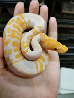 New Screen Reptile Terrarium snakes Tips - creatures that make me happy - Quick chicken recipes Les Reptiles, Cute Reptiles, Reptiles And Amphibians, Pretty Animals, Cute Baby Animals, Animals Beautiful, Pretty Snakes, Beautiful Snakes, Serpent Animal