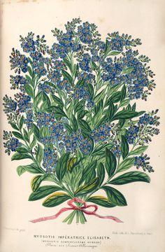 v.13 (1866) - L'Illustration horticole : - Biodiversity Heritage Library