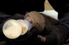 Jedes Jahr im Winter und im Frühjahr werden viele Bärenjunge in Russland zu Waisen. Allein können sie in der Wildnis nicht überleben. Helfen Sie uns, die kleinen Bären und andere Tiere zu retten und zu versorgen und sie später wieder in die geschützte Wildnis zu entlassen.