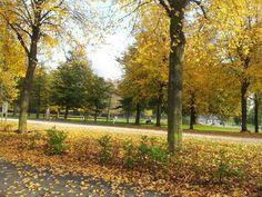 Autumn in Holland