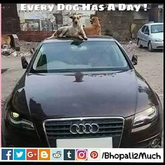 Every Dog has a Day ! #saying #quotes #funny #photography #dog #audi #car #instagram #