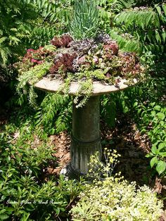 Succulent Bird Bath - http://www.hometalk.com/426930/making-a-succulent-garden-in-an-old-birdbath/photo/76762