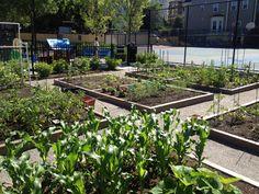urban gardening | Somerville Loves Urban Gardening! « Life in the 'Ville