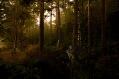 Wood Fairy - by Morten Weber
