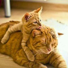 猫の親子 18 ねこLatte+