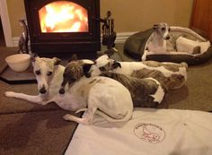 Whippets are like heat-seeking missiles :o)