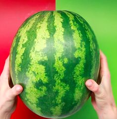 The monster fruit that most likely inspired genetic modification. Avoid using 686 rubber bands by cutting it like this. Cut Watermelon, Easy Peel, Food Hacks, Criss Cross, Avocado, Fruit, Rubber Bands, Mediterranean Diet, Household Tips