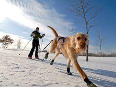 Skijoring at Eagle Lake Regional Park in Maple Grove, MN