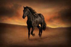Freedom in the Desert by Jenny Woodward on 500px