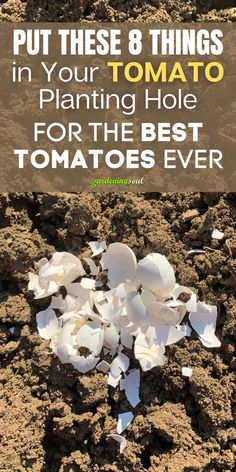 Follow these 8 tomato hacks for best results. #tomatoes Healthy Fruits, Fruits And Veggies, Kfc Chicken Recipe, Natural Beauty Recipes, Uses For Coffee Grounds, Soil Layers, Canning Tomatoes, Natural Homes, Homemade Cleaning Products