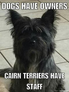 No truer words have ever been spoken. Pet Dogs, Dog Cat, Doggies, Cairn Terrier Puppies, Animals And Pets, Cute Animals, Dog Agility, Little Dogs, I Love Dogs