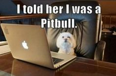 I TOLD HER I WAS A PITBULL # CATFISH - Funny pictures and memes of dogs doing and implying things. If you thought you couldn't possible love dogs anymore, this might prove you wrong. Funny Animal Pictures, Funny Images, Funny Photos, Funny Animals, Cute Animals, Animal Pics, Animal Funnies, Animal Memes, Animal Captions