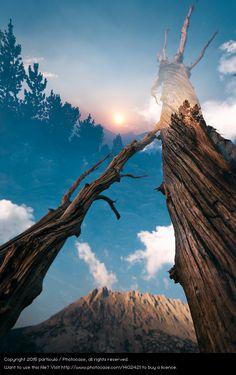 Foto 'Into the Woods' von 'Patrick Lienin'