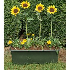 5 Things You Didn't Think to Plant in an EarthBox® (And Why You Probably Should!)