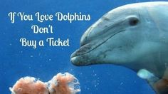 Petition · Ask the Greek President to close down the dolphinarium in Attica Zoological Park Athens. · Change.org