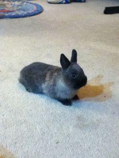 [画像]今日のウサギ : はれぞう