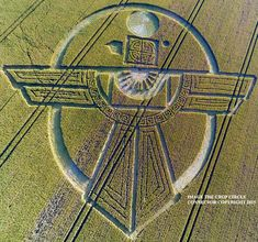 Crop Circle at Uffcott Down, nr Barbury Castle, Wiltshire. Reported 25th July   2015