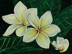 drawings of flowers, jasmine - Bing Images