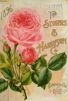 Illustrated cover of the Storrs & Harrison Co's Spring 1896 seed catalogue. Painesville, Ohio.  U.S. Department of Agriculture, National Agricultural Library  Biodiversity Heritage Library.  archive.org