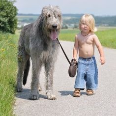 My husband would love an Irish wolfhound!