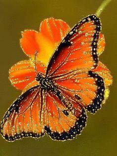 Бабочка - анимация на телефон №1230546